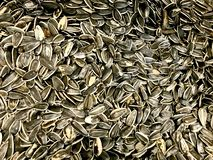 Sunflower Seeds, Raw, In Bulk Container,. 204 calories in 1/4 cup stock photography