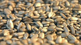 Shelled sunflower seeds on a yellow background. 2 Shots. Close-up. stock footage