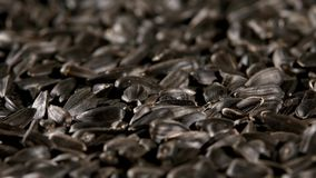 Sunflower seeds, rotation, background stock video footage