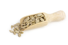 Sunflower seeds on scoop Stock Photography