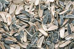 Sunflower seeds scours Royalty Free Stock Photos