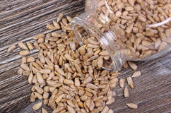 Sunflower seeds spilling out of glass jar. Wooden background Royalty Free Stock Image