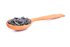 Sunflower seeds in a spoon Stock Image