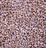 Sunflower Seeds Texture Stock Photography
