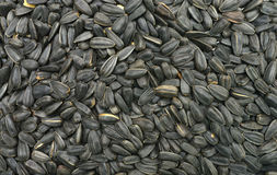 Sunflower seeds texture Royalty Free Stock Photos