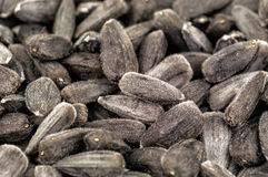 Sunflower seeds texture Stock Images