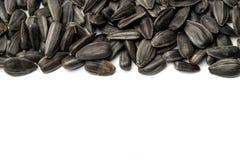 Sunflower seeds on white background Royalty Free Stock Image