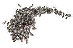 Sunflower seeds Stock Image