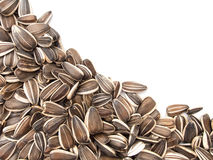 Sunflower seeds on white. Royalty Free Stock Images