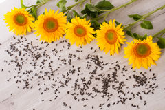 Sunflower with seeds. Stock Photography