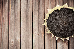 Sunflower seeds on wooden background Royalty Free Stock Photos