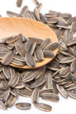 Sunflower Seeds With Wooden Spoon. Stock Image