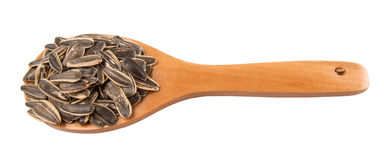 Sunflower Seeds In Wooden Spoon II Royalty Free Stock Photos