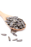 Sunflower Seeds With Wooden Spoon. Royalty Free Stock Image