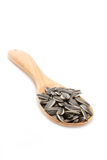 Sunflower Seeds With Wooden Spoon. Royalty Free Stock Photography