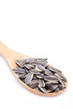 Sunflower Seeds With Wooden Spoon. Royalty Free Stock Images