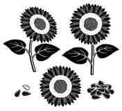 Sunflower set. Vector. Illustration collection, seeds, agriculture vector illustration