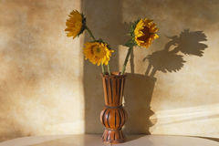 Sunflower Shadows Royalty Free Stock Photography