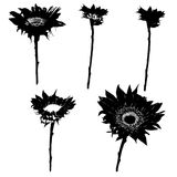 Sunflower silhouettes series Royalty Free Stock Image