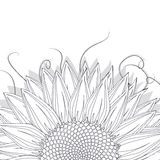 Sunflower sketch. On white background Royalty Free Stock Images