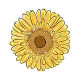 Sunflower sketch for your design Royalty Free Stock Image