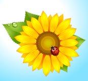 Sunflower-sky vector illustration