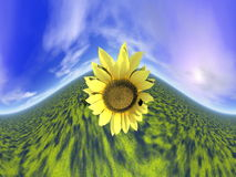 Sunflower and sky - 3D render Royalty Free Stock Photos