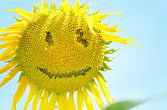 Sunflower with smiley face over blue sky Royalty Free Stock Images