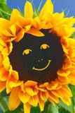 Sunflower smiley face smile funny Royalty Free Stock Photo