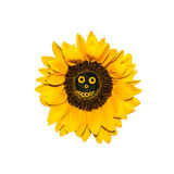 Sunflower with smiling face Stock Image