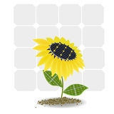 Sunflower on solar batteries Royalty Free Stock Photo