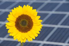 Sunflower and solar panel of electric power station as symbol for renewable energy Stock Images