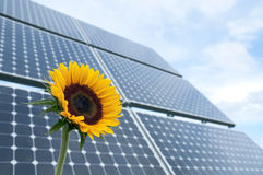 Sunflower and solar panels Royalty Free Stock Photo