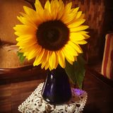 Sunflower with some love. Beautiful sunflower, a gift to a mother who loves flowers and alive colors Stock Photography