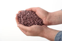 Sunflower sowing seed. Colored sunflower sowing seed in man's hand over white Royalty Free Stock Images