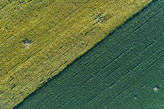 Sunflower and soybean fields. Abstract image of farmlands. Top view of sunflower and soybean fields Stock Photos