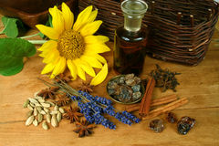 Sunflower and spices Royalty Free Stock Photos