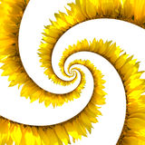 Sunflower spiral Royalty Free Stock Photos