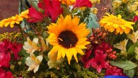 SunFlower. Spring SunFlower Display Spring Garden Stock Image