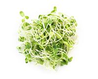Sunflower sprouts isolated on white backgroud, healthy concept