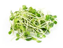 Sunflower sprouts isolated on white backgroud, healthy concept. Sunflower sprouts isolated on white backgroud stock images