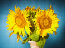 Sunflower still life Royalty Free Stock Photos
