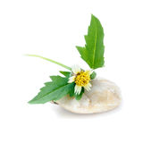 Sunflower on stone, spa concept Stock Image
