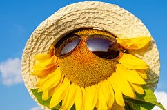 Sunflower in a straw hat against the blue sky royalty free stock images