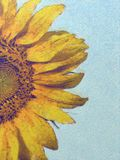 Sunflower on summer day. Painting of Sunflower closeup on summer day stock illustration