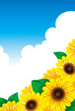 A sunflower and summer sky Royalty Free Stock Photos