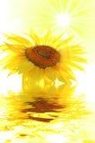 Sunflower and sun Stock Photography
