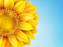 Sunflower sun against. EPS 10 Royalty Free Stock Image