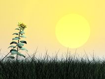 Sunflower and sun - 3D render Stock Images