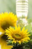 Sunflower and sunflower oil bottle Stock Image